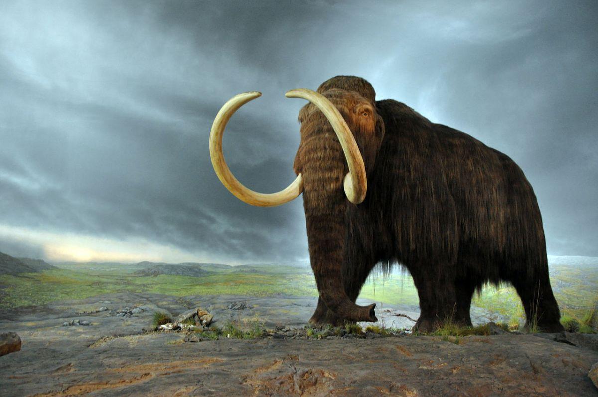Kindercollege: Het prehistorische dier de Mammoet